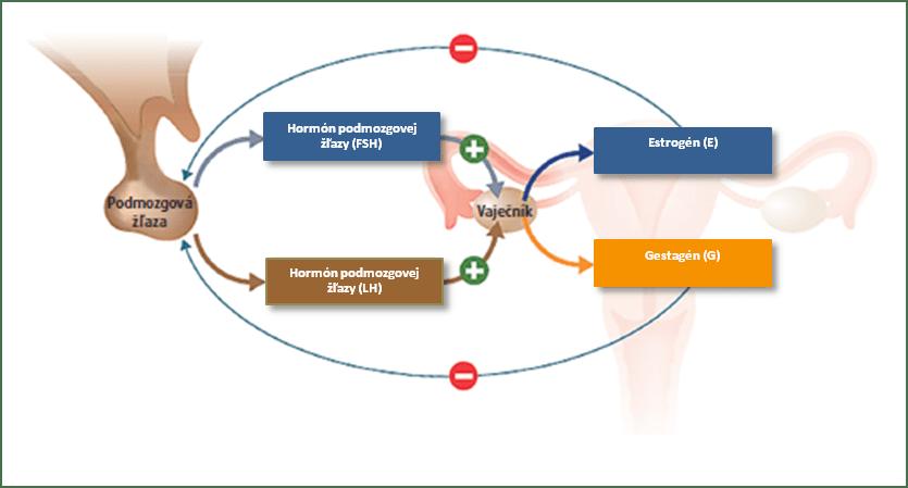 Fungovanie hormónov v ženskom tele